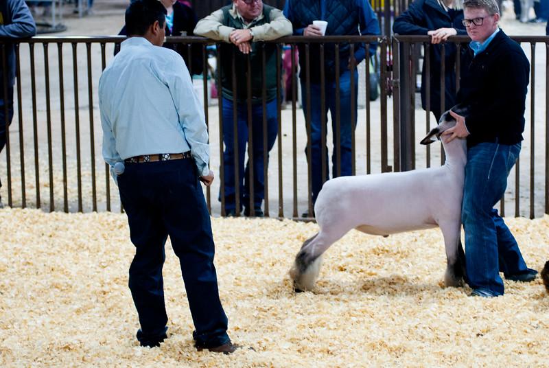 kay_county_showdown_sheep_20191207-81.jpg
