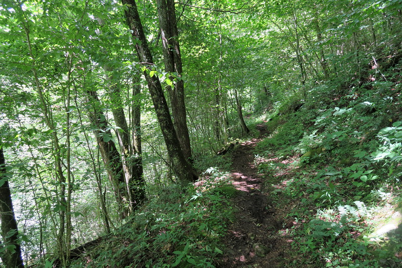 Enloe Creek Trail - 3,680'
