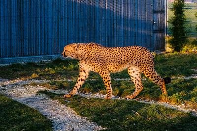 Tonis Zoo
