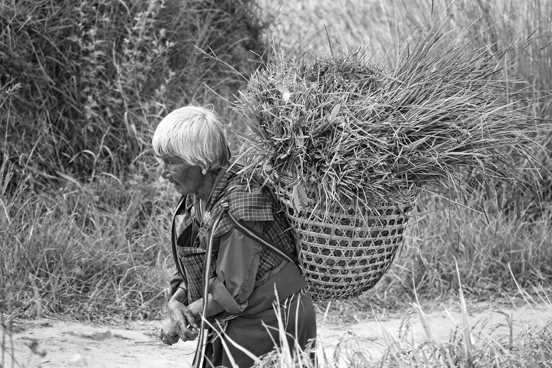old lady in the country side copy.jpg