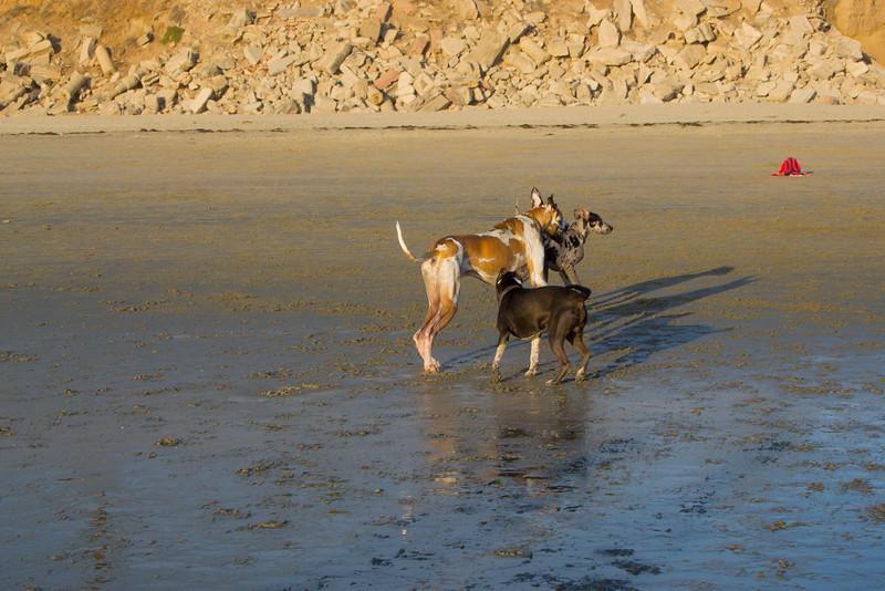 dogs_beach-68.jpg