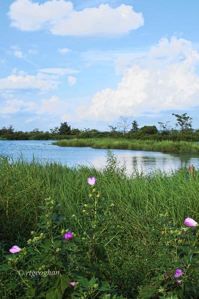 August 11_Mill Creek Marsh_0605.jpg