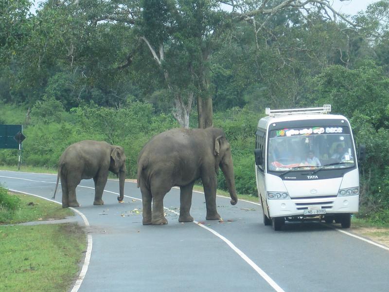 Sri_Lanka17-9596.jpg
