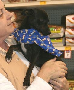 Huntsville Animal Services Petsmart 022506