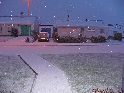 Snow -January 2010