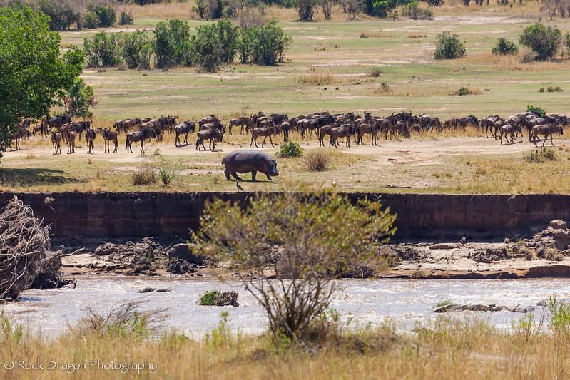 North_Serengeti-32.jpg