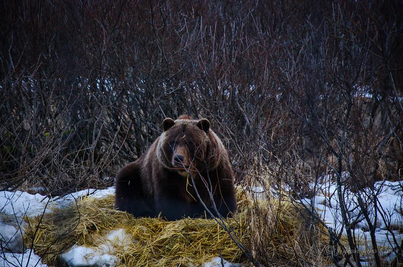 USA-Alaska-Alyeska-0350.jpg
