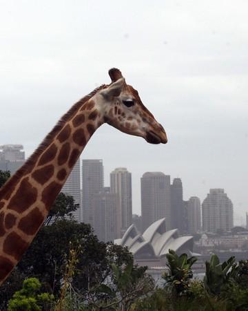 Sydney Zoo- Featherdale Wildlife