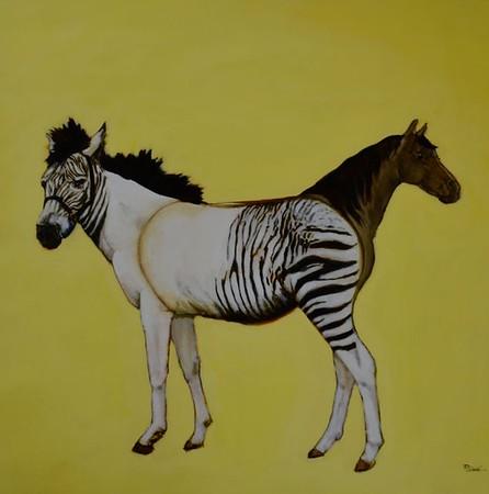 Zebra Horse-Slack, 36x36 on canvas (AERS11-) JPG