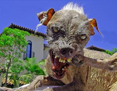 Lulu - Sam the Ugly Dog