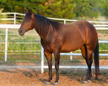 Cowhorses