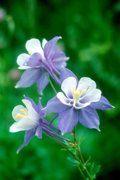 amh FLOWERS (1151).jpg