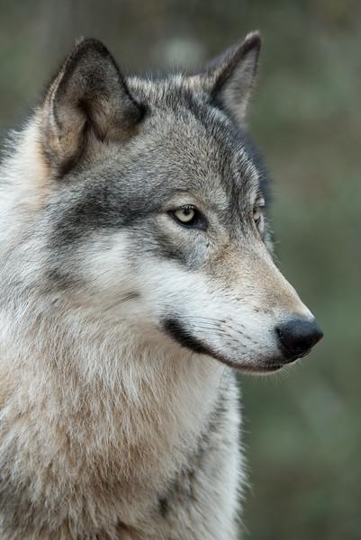 Seacrest Wolves_-7.jpg