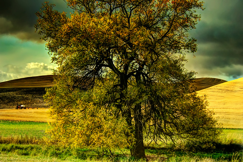 Palouse Tree
