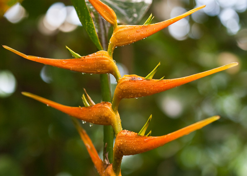 2009 06 30_NY Botanical Gardens_0686_edited-1.jpg