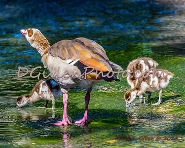 2018 04 26 Brackenridge Park Birds