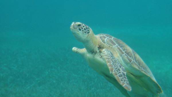 2014-01 Caye Caulker, Belize