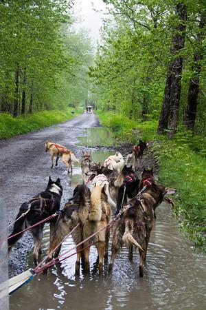 Sled Dog Summer Camp