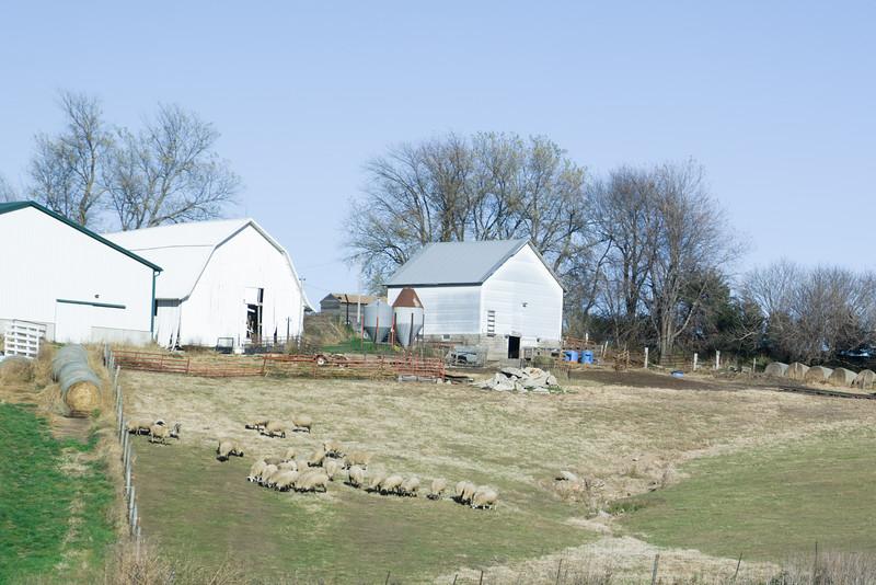 Iowa Sheep Farm