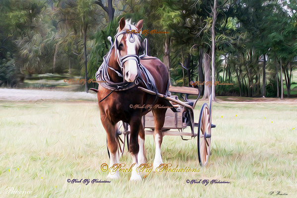 Equine Collectible Art