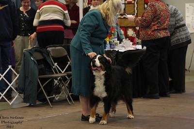 Veteran Dog 11 yrs+