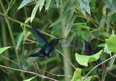 Caribbean Birds & Wildlife