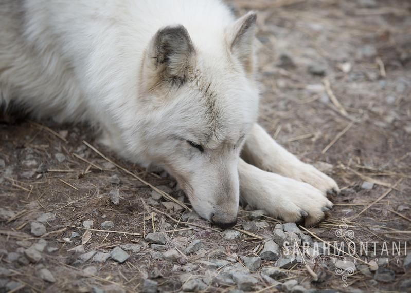 Sleepy Linnea
