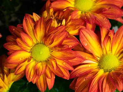 Flowers & Foliage