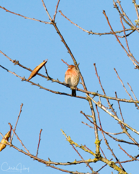 unknown bird.jpg