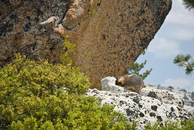 Yosemite_07_(DSC_4032).jpg
