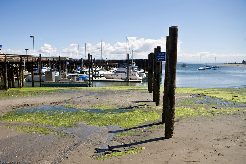 Low tide Langley, Whidbey Island WA