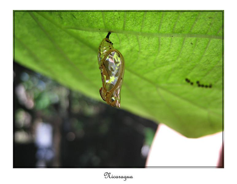 0618_framed_small.jpg