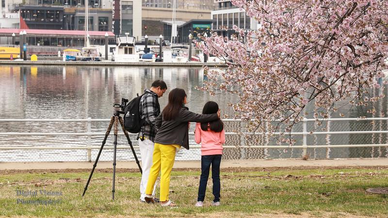 DC Cherry Blossoms 2019 041.jpg