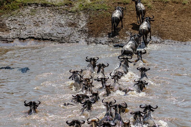 Kenya 2015-06691.jpg