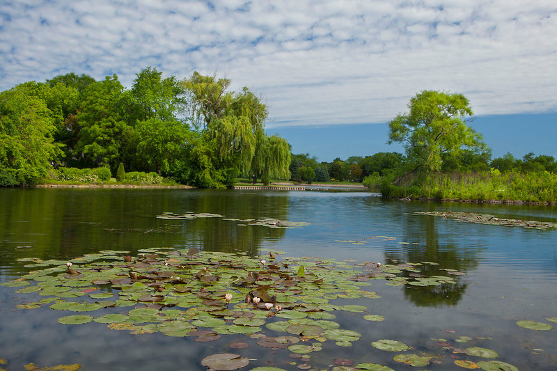 Lily pond scenic