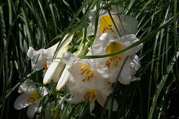 IMG_6653-white-jumble www.jpg