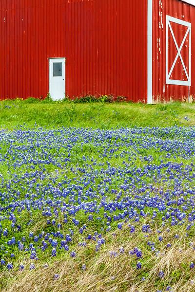 2015_4_3 Texas Wildflowers-7510-2.jpg