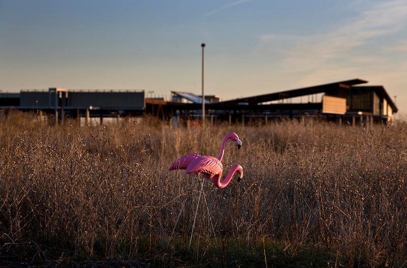 flamingo03.jpg