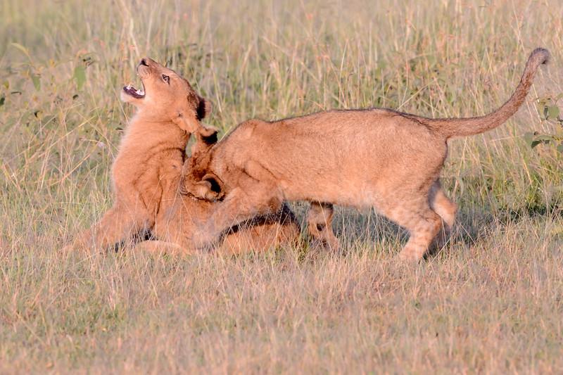 20160215__KET7669_Serengeti_Day_7.jpg