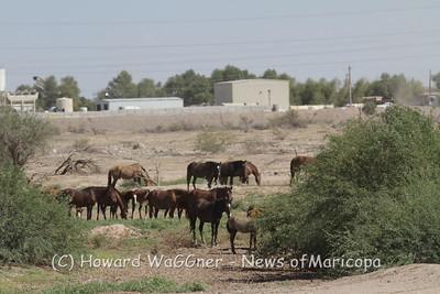 Wild Horses 9-27-2013