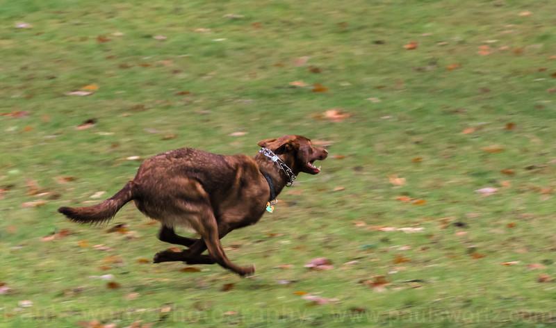 Atticus - Dog Park Fun