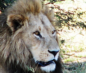 06 Africa, Vol. 3 Okavango Delta