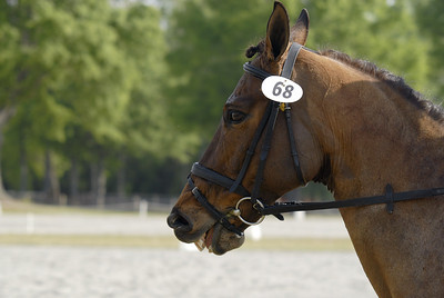 070415 USEA Horse Trial