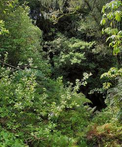 Te Popo Gardens