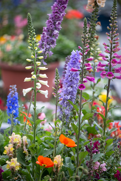 Spring Flowers B-246.jpg