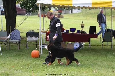 Puppy 6-9mo Dog