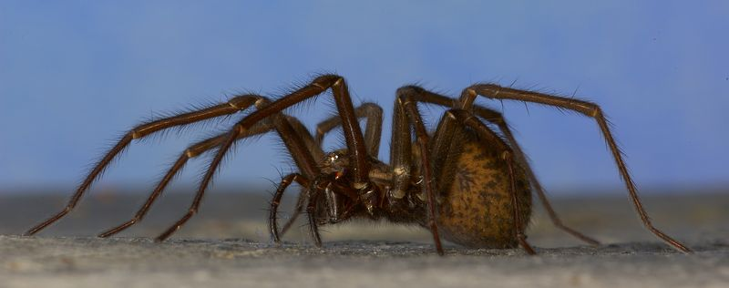 Grass Spider with a low down angle.