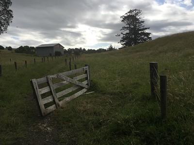 Auckland Bush - Waitoki