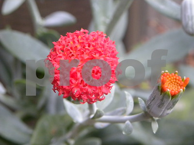 pretty-colorful-succulents-drive-away-winter-doldrums