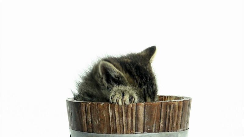 Kittens_tabby_010.mov